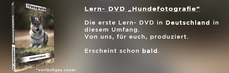 Lern- DVD Hundefotografie