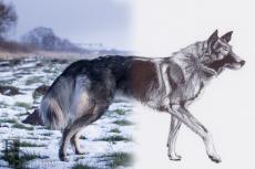 Hundezeichnung