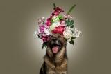 Hundeportrait (Blumen)