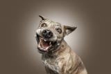 Hundeportrait (Grimassen)